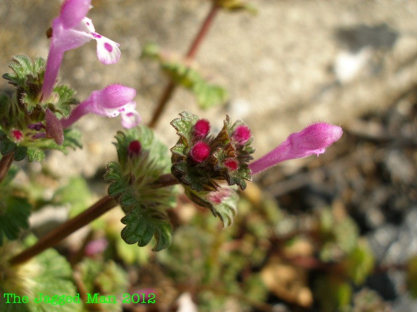 Beautiful and small little plant/flower growing out of the sidewalk.